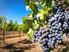 Галиссия приглашает на винную экскурсию