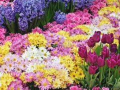 В Гяндже состоялся праздник цветов