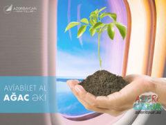 Купи билет AZAL — посади дерево!