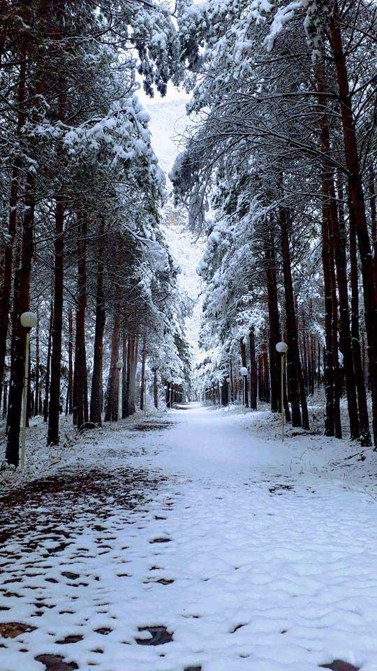 Зимний сад отеля Кунжут Шеки